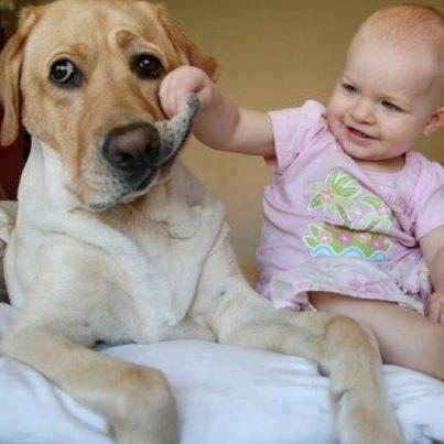 un cane maltrattato da un bimbo piccolissimo