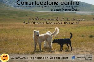 comunicazione-canina-paola-nuovo